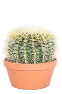 cactuss